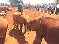 Elephant cubs playing.jpg