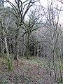 Elibank Forest - geograph.org.uk - 294270.jpg