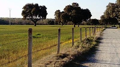 Encinar en el camino de las Pueblas paralelo al Voltoya.jpg
