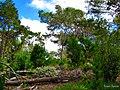Entre pinos y brezos - panoramio.jpg