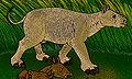 Eotitanops borealis.jpg