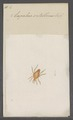 Eupalus - Print - Iconographia Zoologica - Special Collections University of Amsterdam - UBAINV0274 071 06 0025.tif