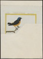 Euphonia musica - 1700-1880 - Print - Iconographia Zoologica - Special Collections University of Amsterdam - UBA01 IZ15900413.tif