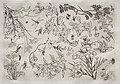 Félix Bracquemond - Dinner Service (Rousseau service)- Flowers (no. 22) - 1922.408 - Cleveland Museum of Art.jpg
