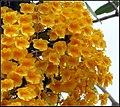 FLOWERS 4 (7255897460).jpg