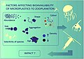 Factors influencing the bioavailability of microplastics to zooplankton.jpg