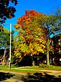 Fall Colors in Madison - panoramio (7).jpg