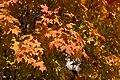 Fall foliage img 2454.jpg