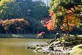 Fall leaves in Koishikawa Korakuen - nov 20 2012.jpg