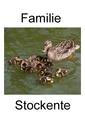 Familie Stockente.pdf