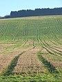 Farmland, Ewelme - geograph.org.uk - 1118865.jpg