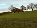 Farmland, Oare - geograph.org.uk - 282670.jpg