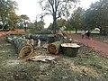 Felled Poplars - geograph.org.uk - 1550704.jpg