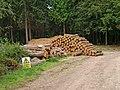 Felled logs in Eymore Wood - geograph.org.uk - 1512274.jpg