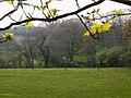 Field in front of Sandy Grove, Llanteg - geograph.org.uk - 1291163.jpg