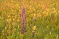 Field of flowers (14332507828).jpg