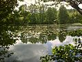 File-Turtul Mill Pond 2.jpg