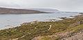Fiordos cerca de Vattarnes, Vestfirðir, Islandia, 2014-08-14, DD 108.JPG