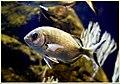 Fish (2258734222).jpg