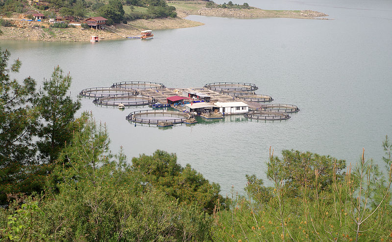File:Fish farming - Kozan Dam, Adana.JPG - Wikimedia Commons