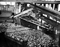Fish offal being dumped into scow from cannery, Anacortes, Washington, 1917 (COBB 30).jpeg