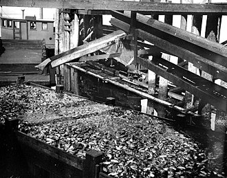 Anacortes, Washington - Fish offal being dumped into a scow from a cannery in Amacortes, 1917