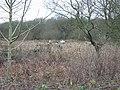 Five Konik ponies graze on land at Gibbins Brook - geograph.org.uk - 643639.jpg