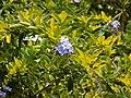 Flora at Kailasagiri 05.jpg