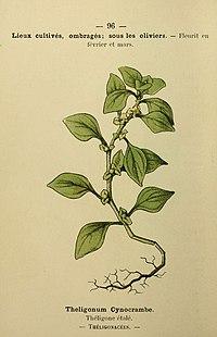 Flore coloriée de poche du littoral méditerranéen de Gênes à Barcelone y compris la Corse (6244469616).jpg
