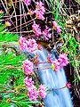 Flores na Cachoeira dos Cristais.jpg