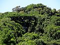 Floresta tropical subcaducifólia.jpg
