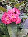 Flower567.jpg