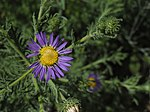 Flower (Carr Canyon) (20484361619).jpg