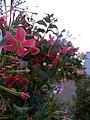Flower 26 HDR.jpg