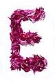 Flower Alphabet - E.jpg