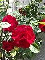 Flower Dortmund 21.jpg