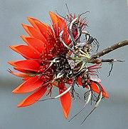 Flower I IMG 3974