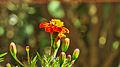 Flowers again.jpg