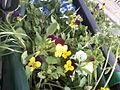 Flowers in Gorky Park.jpg
