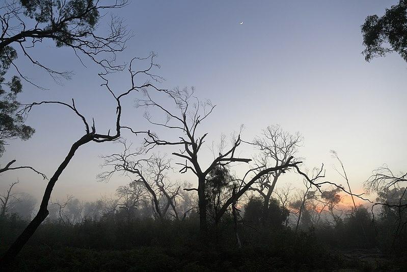 File:Fog at Dawn (33454211194).jpg