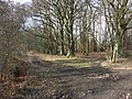 Footpath Junction in Chisley Wood - geograph.org.uk - 136204.jpg
