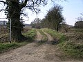 Footpath and Tree - geograph.org.uk - 141928.jpg