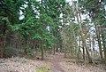 Footpath through conifers, Clowes Wood - geograph.org.uk - 1211385.jpg