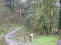 Footpath to Ashford Chace - geograph.org.uk - 357346.jpg