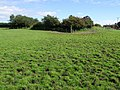 Footpath to St Andrews graveyard, Miningsby - geograph.org.uk - 554879.jpg