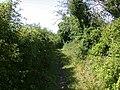 Footpath to south Teversham - geograph.org.uk - 923190.jpg