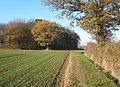 Footpath towards track past Little Newton Wood - geograph.org.uk - 614105.jpg