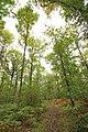 Forêt Départementale de Méridon à Chevreuse le 29 septembre 2017 - 14.jpg