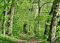 Forest - panoramio - paulnasca (106).jpg