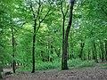 Forest - panoramio - paulnasca (18).jpg